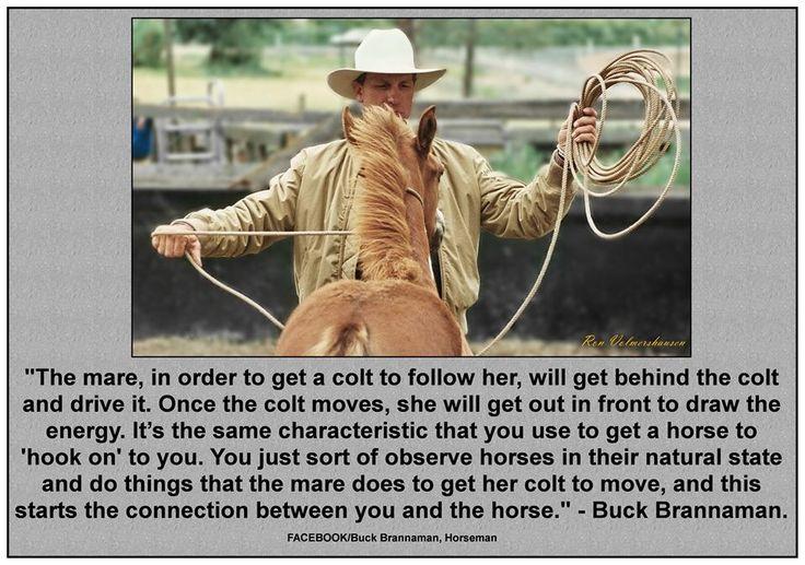 Buck Brannaman - Bing Images