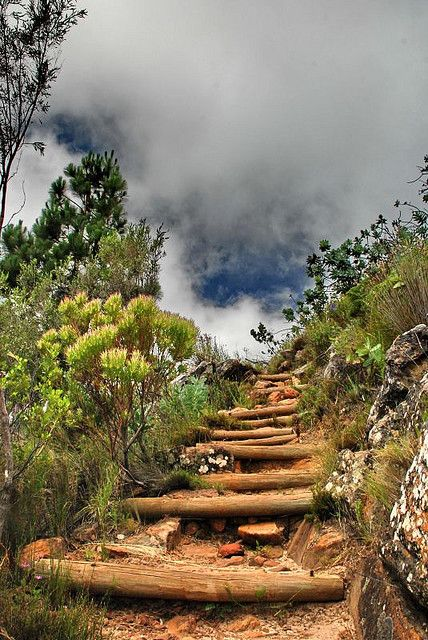Cape Town, Table Mountain, the way to the top if you don't feel like the cable way.