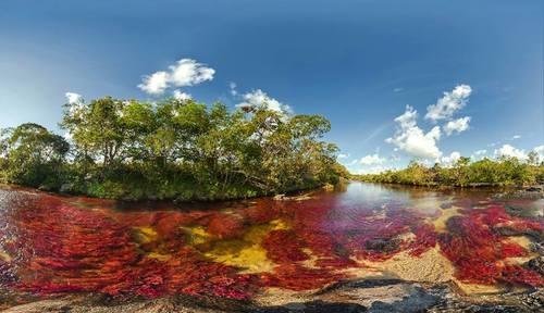 """Ubicado en la Sierra de la Macarena, Colombia, el """"Caño Cristales"""", un pequeño río de apenas 100 Km. de longitud, es conocido también como El río de los cinco colores o El río mas hermoso del mundo, y las tonalidades que adquiere se deben a las piedras cubiertas de musgo y algas de color amarillo, azul, verde, negro y rojo."""