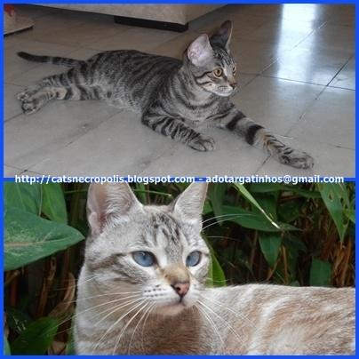 Gatinhos para adoção em Santos, ABC ou São Paulo - adotargatinhos@gmail.com