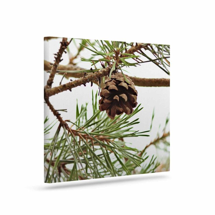 "Sylvia Coomes ""Pinecone"" Green Brown Canvas Art"