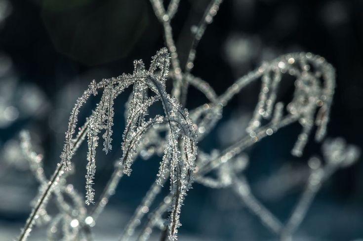 Frozen - Jäässä by Pauliina Kuikka