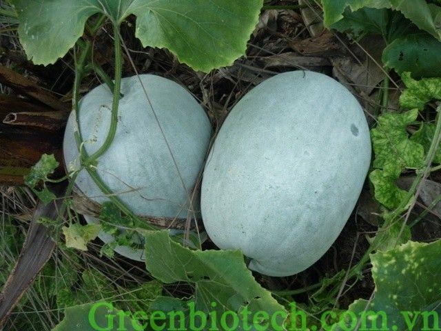 Các món ăn đơn giản giúp giảm cân nhanh hiệu quả - http://greenbiotech.com.vn/cac-mon-an-don-gian-giup-giam-can-nhanh-hieu-qua/
