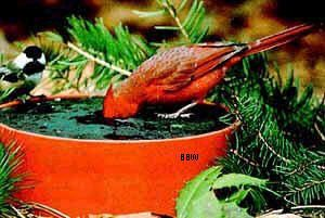 Happy Bird Deluxe Solar Sipper- Fresh water for birds in the winter. It heats with a unique SOLAR design against winter ice.