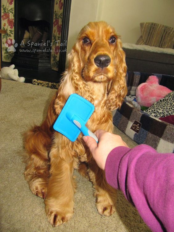 Top 10 Tips For Brushing Your Dog And Dealing With Mats Can Dogs