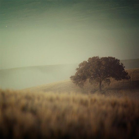 Series - over the bed. Master bedroom.: Italy Photography, Beautiful, Trees, Landscape Photography, Tuscany Italy, Landscapes
