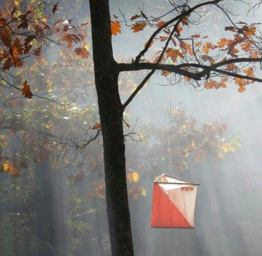 Lanterna nel Bosco delle Fate... By Bozzola
