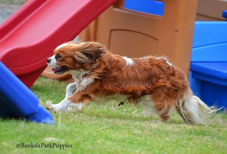 One of our dads Joffre running at full speed! 😜 🐾