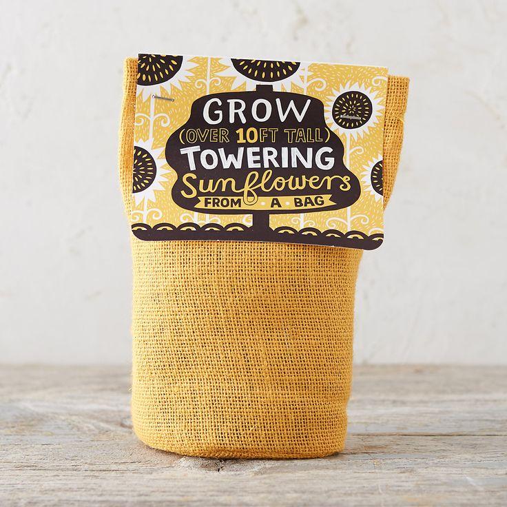 Giant Grow Kit in Garden Grow Kits at Terrain