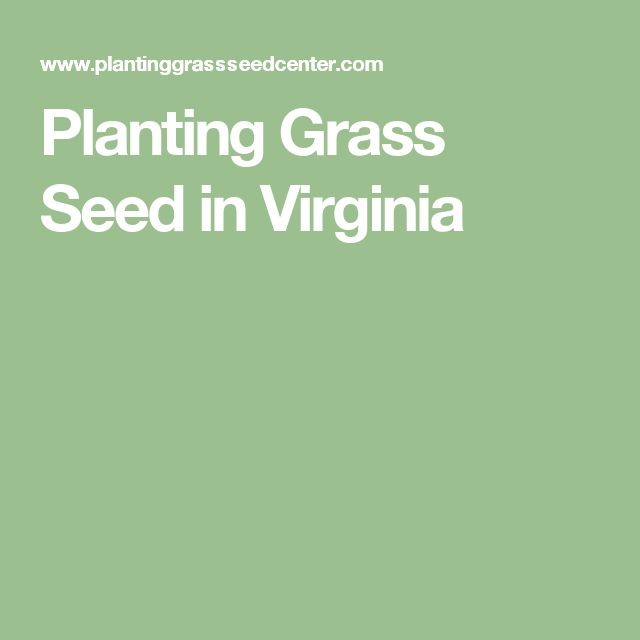 Planting Grass Seed in Virginia
