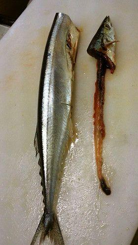 簡単!早い!きれい!秋刀魚の内臓のとり方