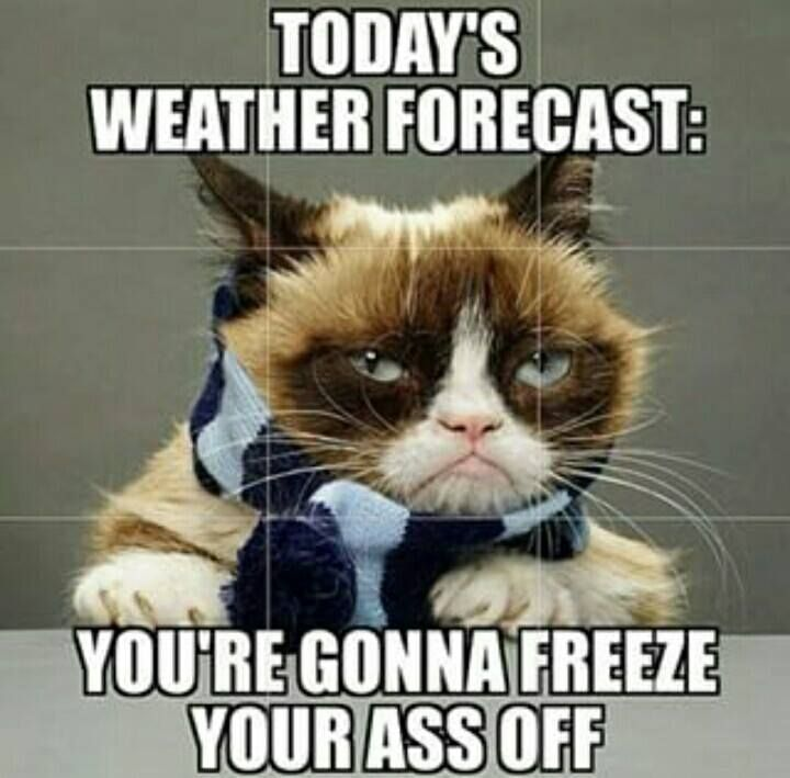 0c6f09fc7bddd68b3f8d8336f403b82c cold weather funny weather memes 154 best cold brrrrr images on pinterest baby kittens, aunty acid