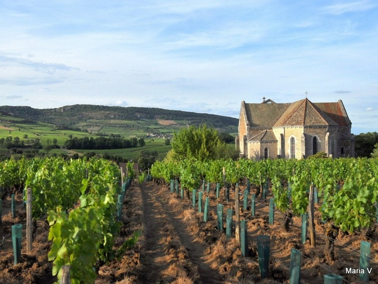 Burgundy-France, Cannot wait to be in the French wine ...