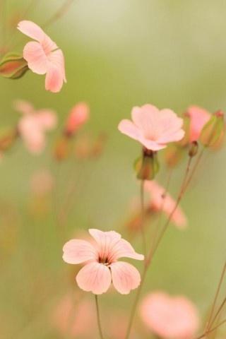 Florecillas delicadísimas.