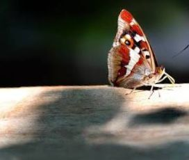 All the art of living lies in a fine mingling of letting go and holding on.  ~ Henry Ellis