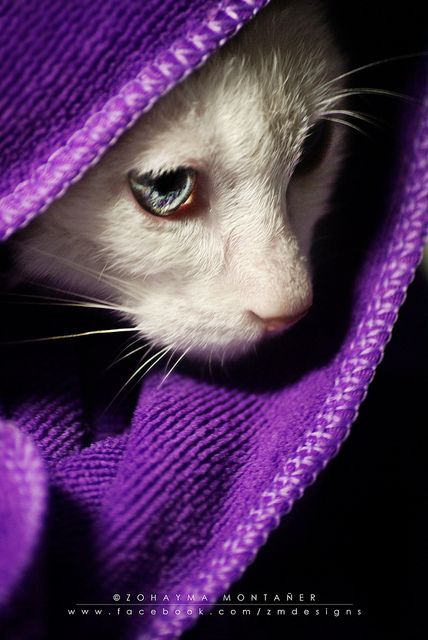 Kitty drying off in a purple towel after bath time.