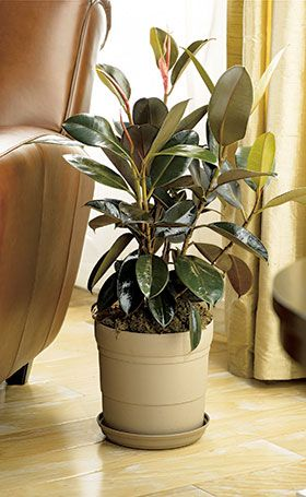 Indoor plants need a little TLC, too! Follow these four simple tips to grow beautiful, long-lasting houseplants.