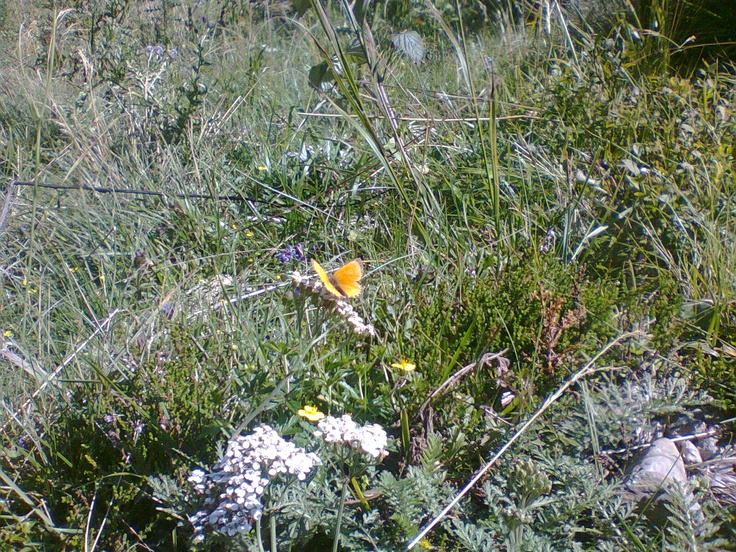 A nice butterfly