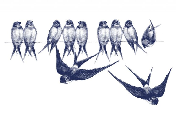 Vintage Bird Image Swallows on Line (blue)