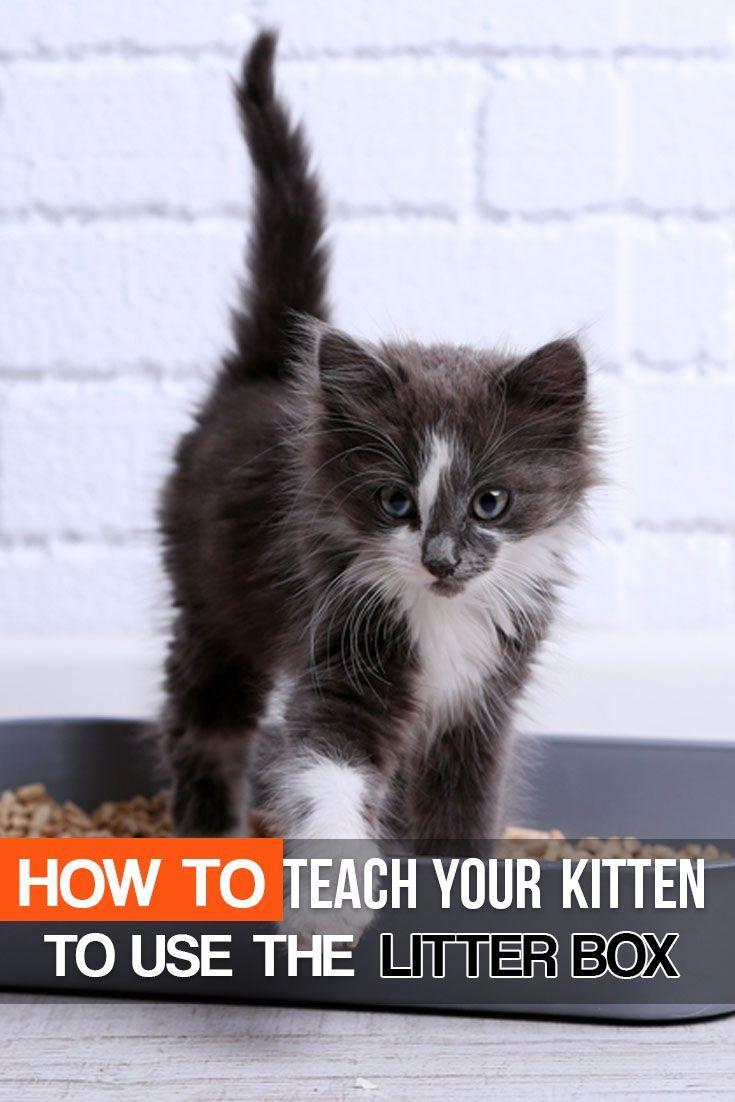 Felineliving Net Cat Training Litter Box Litter Box Training Kittens Training A Kitten