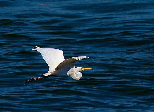 Sobre o mar azul / Over the blue sea