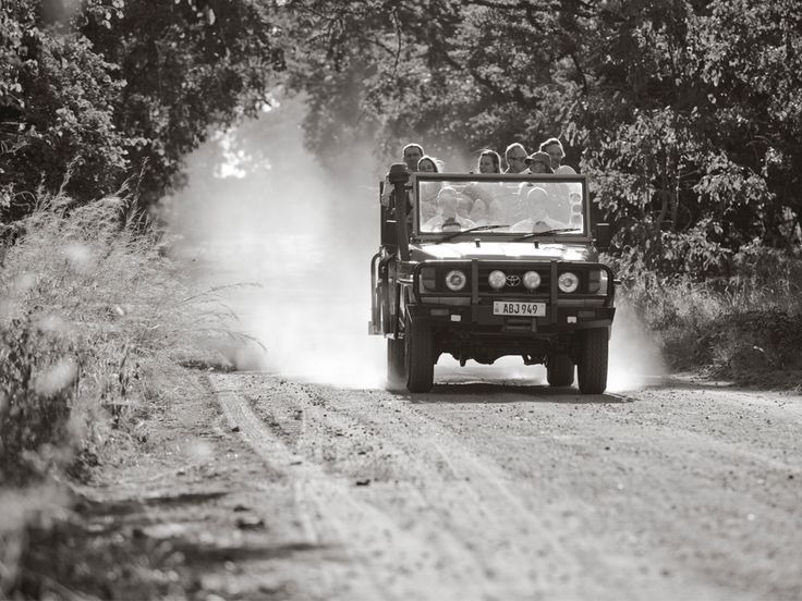 We offer game drives for those looking to get a little closer the wildlife