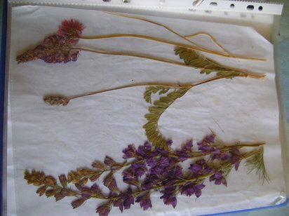 Métodos para secar flores