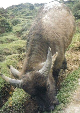 Wild Animals - News - Bubblews