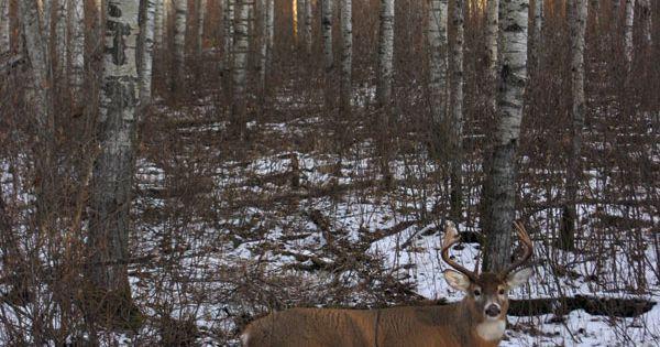 Vysoká zvěř, Lov and Lov na jeleny on Pinterest