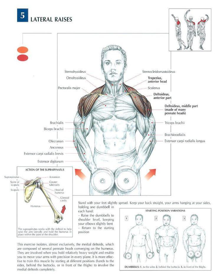 Deltoids(shoulders) #lateralraise #workout #gymaholic