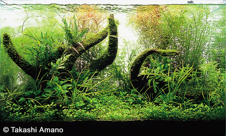 Planted Amano Aquarium: From Start to Finish excerpt: useful article ...