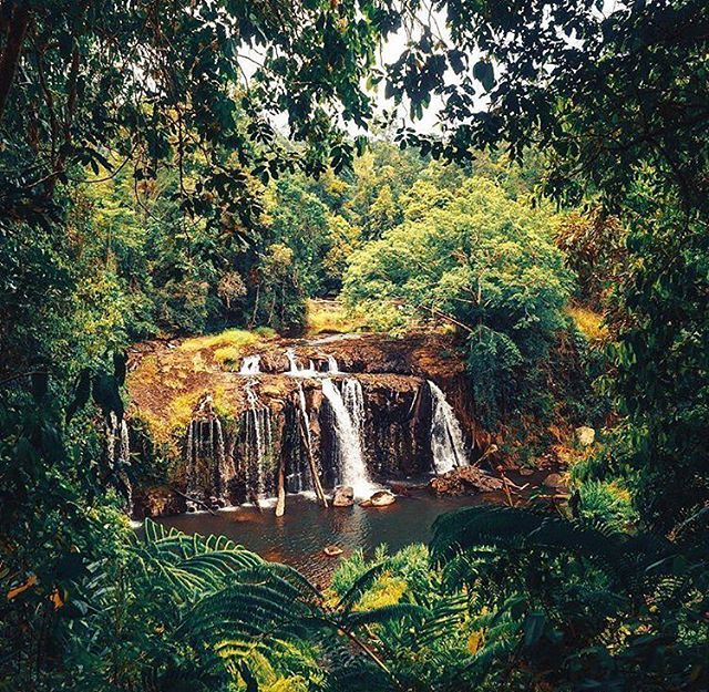 It's waterfall weather on the #athertontablelands 💦💚 This is Tchupala Falls in the Wooroonooran National Park 📷@wheresyoyo