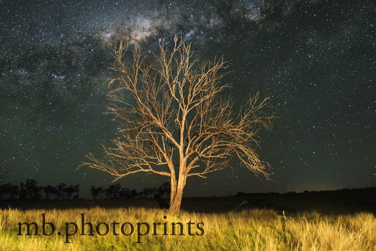 Visit my Etsy store to see what other prints are available. Old Tree Night Sky Stars Milky Way Farm Landscape Décor Dead Tree
