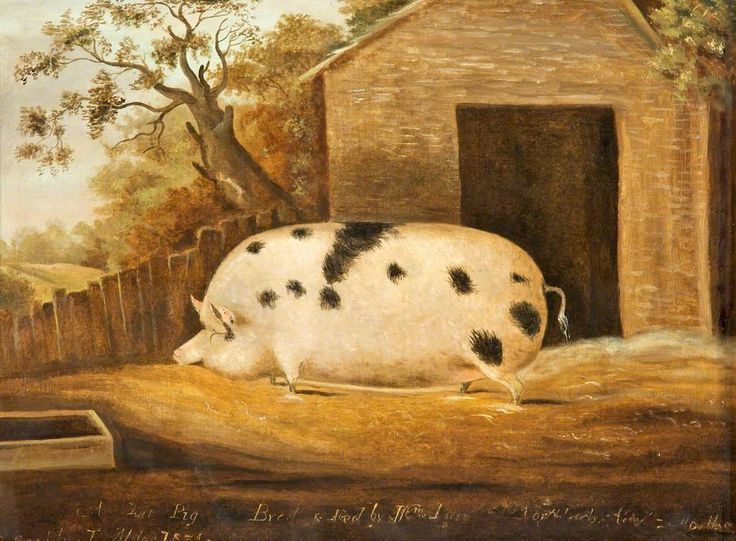 English orchardists, lock up those orchard pigs!Image: Gloucester Old Spot by John Miles, 1834