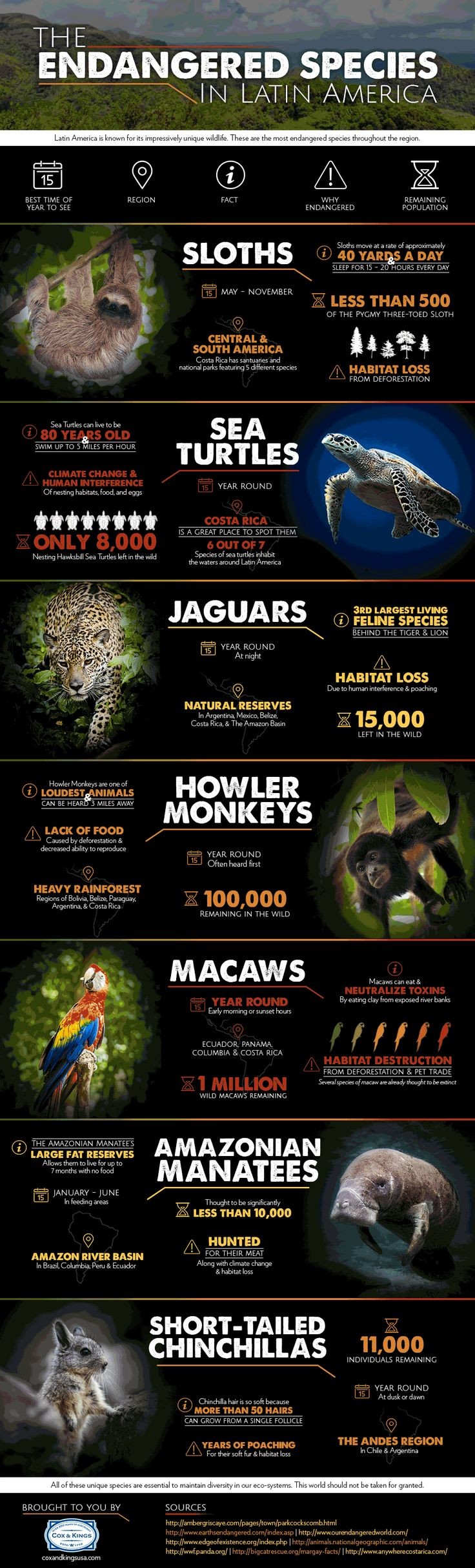 Zoology poster design - The Endangered Species In Latin America Infographic