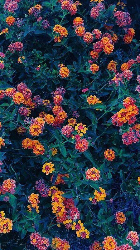 FLOWER AESTHETIC pinterest: A R T