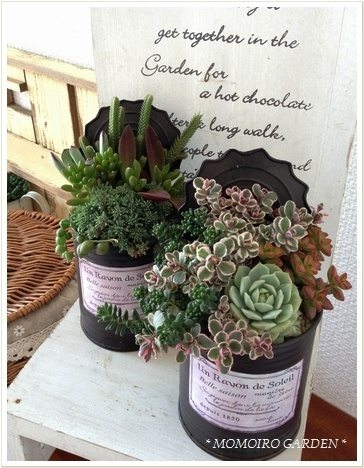 creatively potted succulents