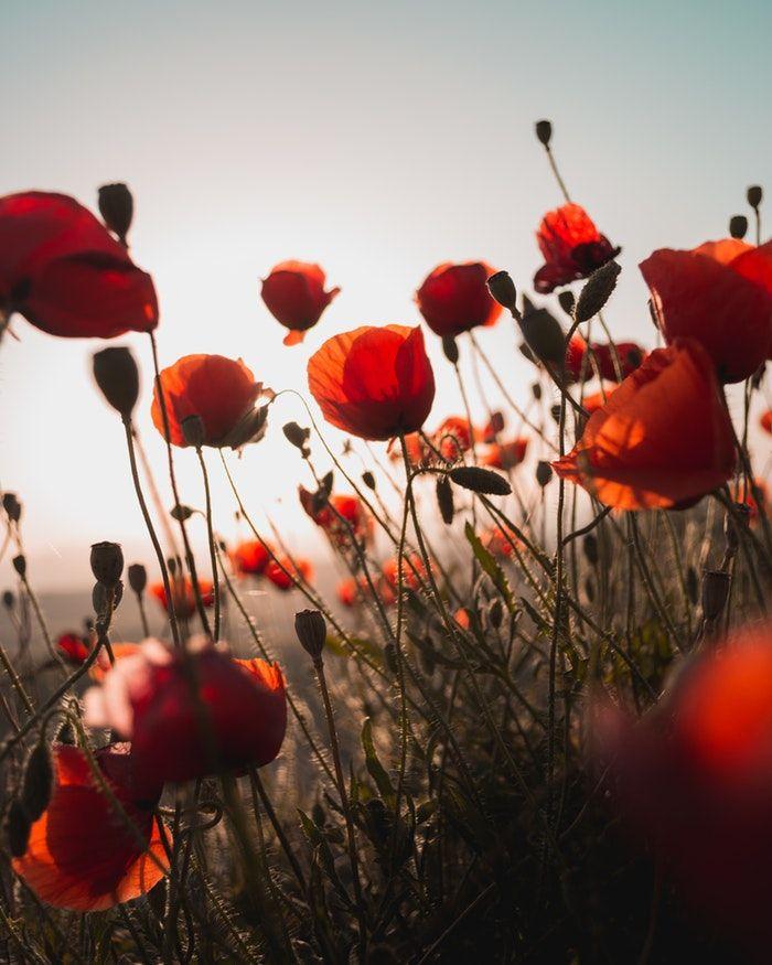 Giftige Beeren Stopplichter Warnschilder Es Ist Keine Uberraschung Dass Rot Im Allgemeinen Als Negative Farbe Flower Images Flower Pictures Flower Seeds
