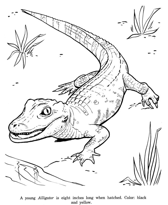 136 best Zoe images on Pinterest Coloring pages, Printable - new alligator coloring pages to print