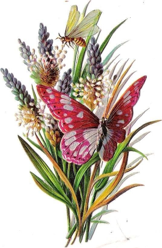 Oblaten Glanzbild scrap die cut chromo Schmetterling butterfly papillon gras bee