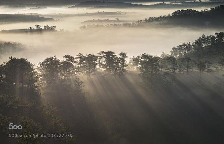 Morning sunlights in Da Lat misty pine forest http://www.breathtakingzin.com/2015/04/morning-sunlights-in-da-lat-misty-pine.html…