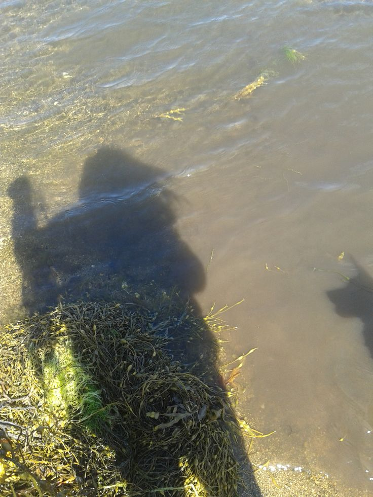 My shadow holding seaweed ready to throw for Laddy's shadow ;)