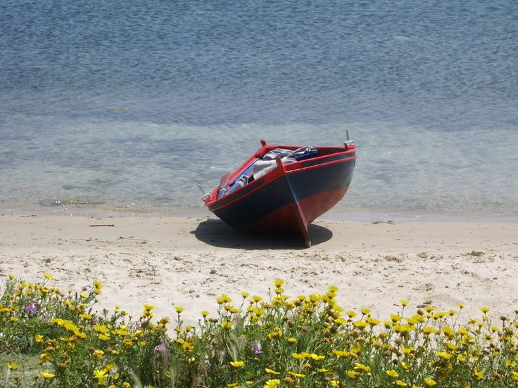 Barca tunisina a riposo vicino Tunisi #tunisia #africa #turismo