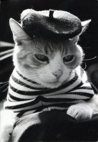 Top 25 ideas about Kitty Couture- All Dressed Up on ...