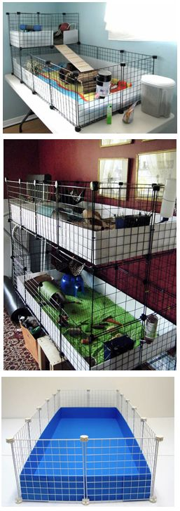 Dream guinea pig home. Need to find out where to buy the supplies for this!