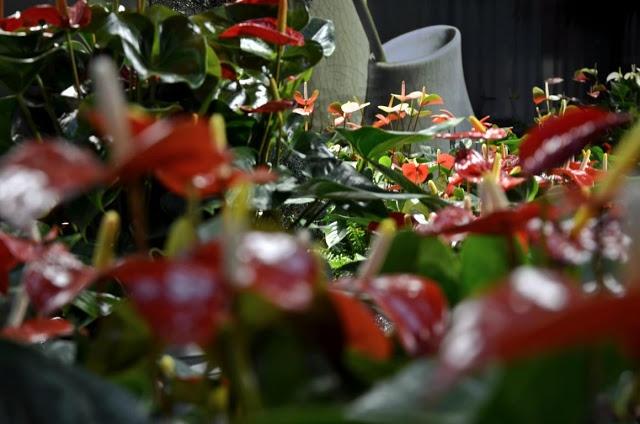 Freizeit Messe Nürnberg  Orchideen