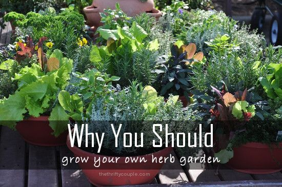 Why you should grow your own DIY Herb Garden and ideas and tips for getting started!