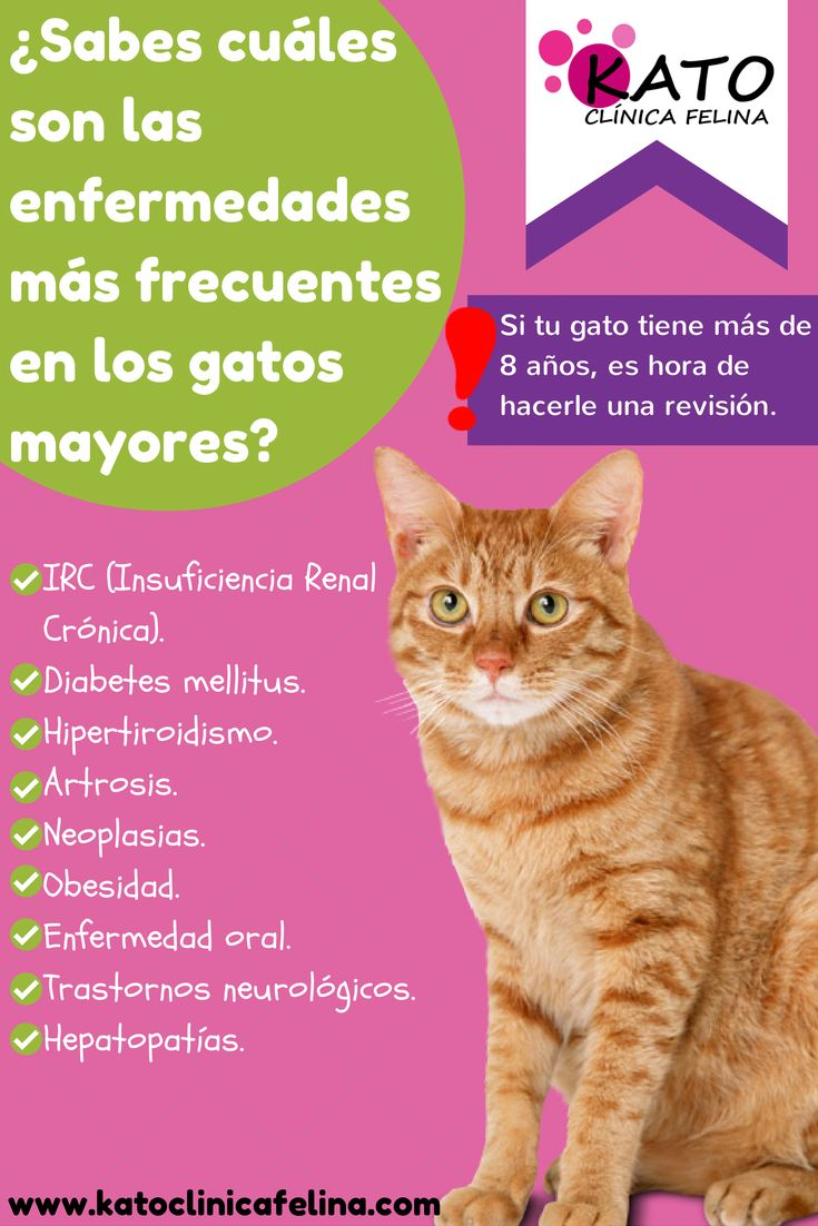 Lista de enfermedades más frecuentes en gatos mayores. A continuación os dejamos una infografía donde podréis encontrar las enfermedades más frecuentes en gatos mayores: - Insuficiencia renal crónica - Diabetes Mellitus - Artrosis - Neoplasias - Obesidad - Enfermedad oral - Trastornos neurológicos - Hepatopatías  Most common diseases in older cats.