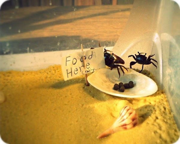 What Food Does A Fiddler Crab Eat