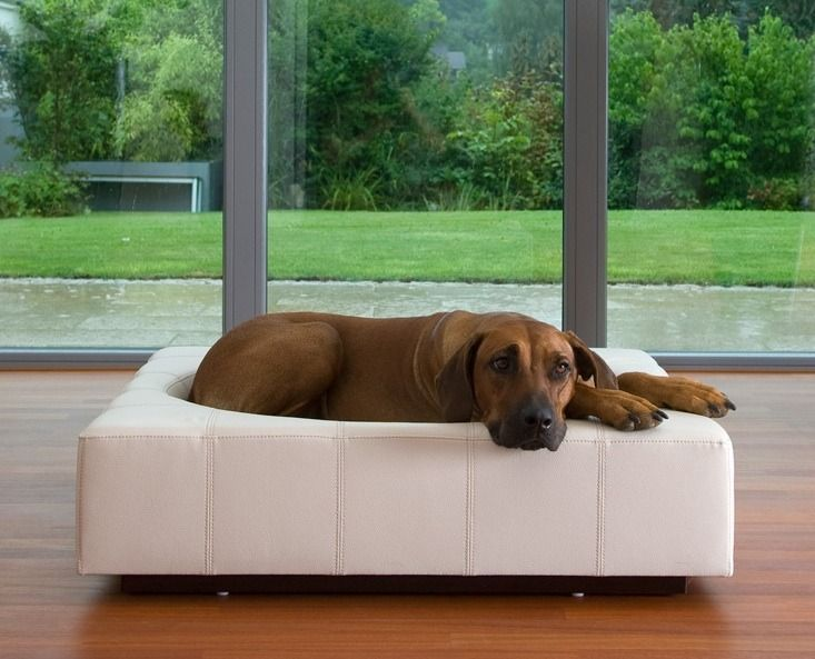 cube leather dog bed [CI-CUBE-0-M-LCR] - $2,680.00 : Luxury Pet Furniture & Accessories | Modern Pet Supplies For Pampered Pets